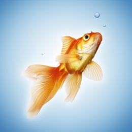 郵票     主题鱼类  '
