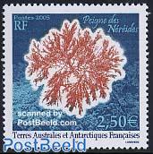 Corals, Peigne des Nereides