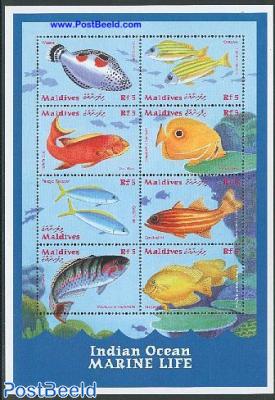 Fish 8v m/s, Wrasse