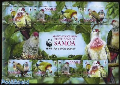 Fruit-Dove of Samoa, WWF m/s